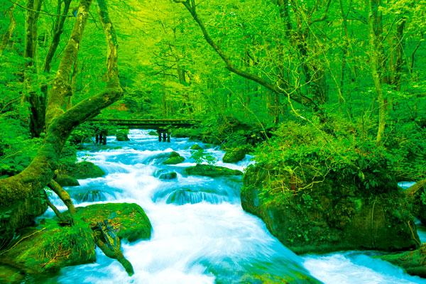 奧入瀨溪-(1)