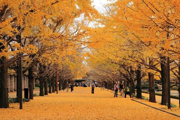 3-shutterstock_554451388昭和紀念公園